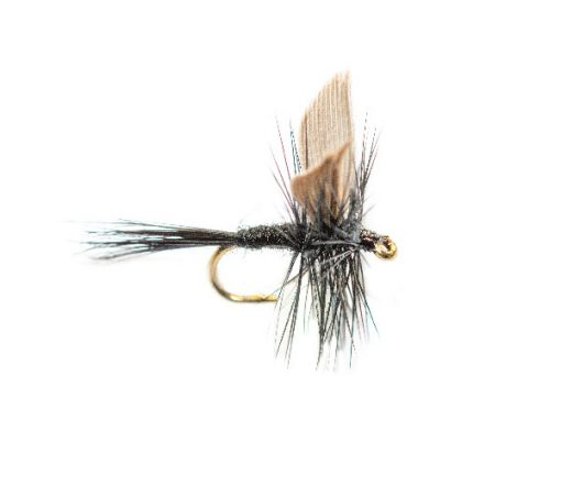 Black Gnat Winged Dry Fly, available at teh Fly Shop Online, Fish Fishing Flies