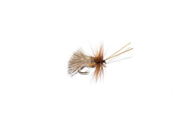 Goddard Caddis Amber Belly Sedge