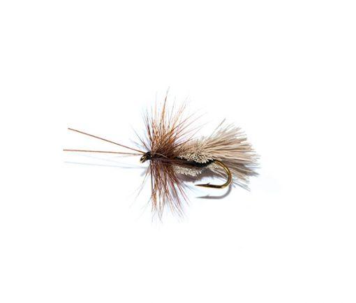 Fish Fishing Flies Goddard caddis black belly sedge
