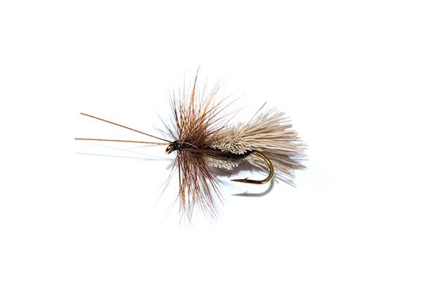 Fish Fishing Flies Goddard caddis black belly sedge