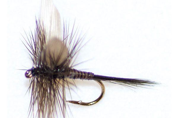 Dark Olive Quill Winged