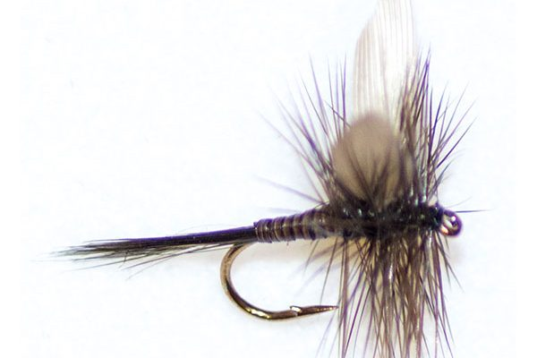 Dark Olive Quill Winged