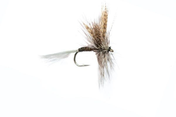 Quill Gordon dry fly