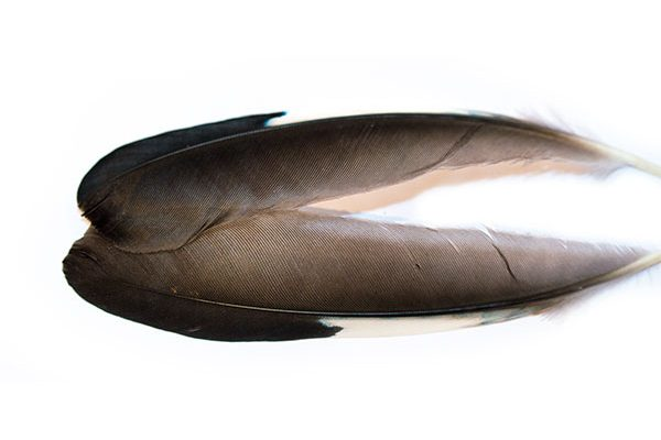 Waterburn Natural Range Mallard Wing Feathers