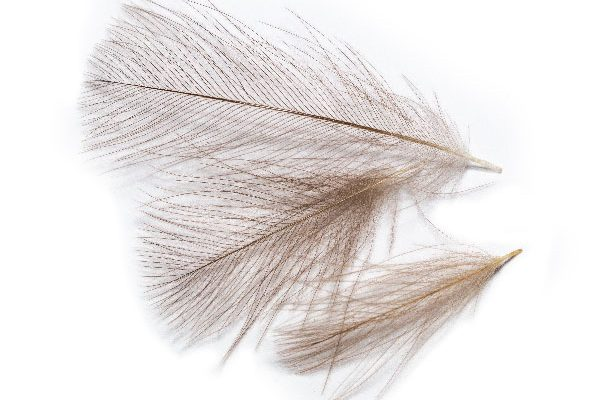Hand Selected CDC Feathers
