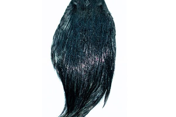 Black Cock Cape, great for woolly buggers