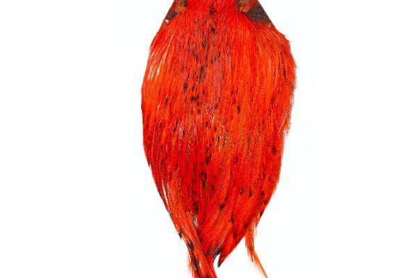 Sunset Orange Cock Cape
