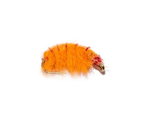 Weighted Orange Shrimper