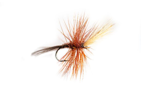 Top Ten Fishing Flies, Elk Wing Mayfly
