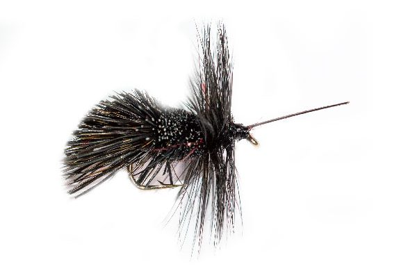 Before Midnight caddis UV Belly