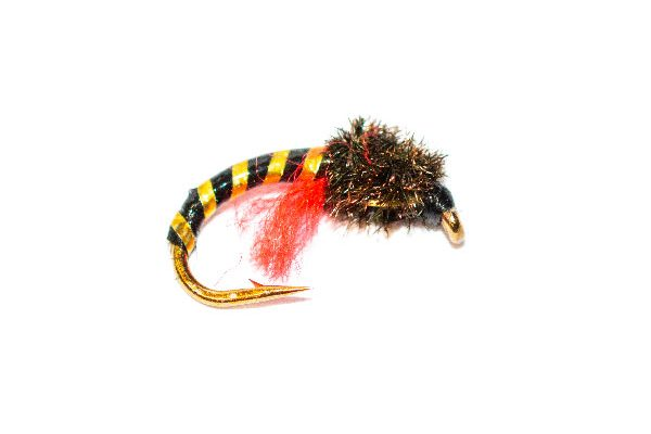 Peacock Head Gold Rib Crisp Packet Epoxy Buzzer Trout Fly