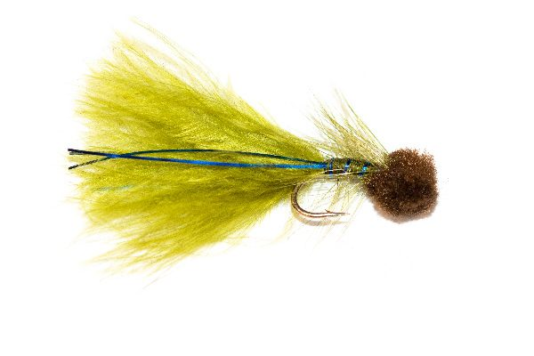 Hatching Brown Hot Head Blue Flash Damsel