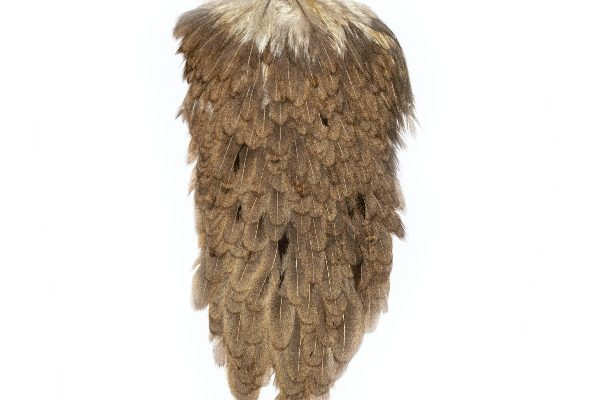 Mid Brown Grey Hen Cape