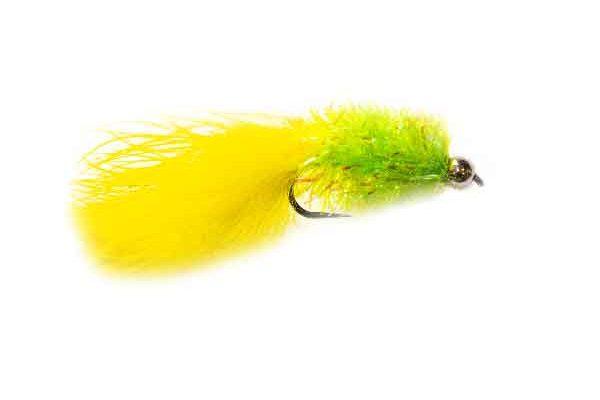 Lemon and Lime Cactus Leech